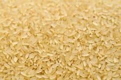Rohe Reiskornnahaufnahme Stockfotografie