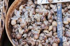 Rohe Schnecken in den Oberteilen lebendig für Verkauf im Fischmarkt von Catania, Sizilien, Italien lizenzfreie stockfotografie