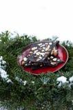 Rohe Schokolade des strengen Vegetariers Lizenzfreies Stockfoto
