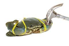 Rohe schwarze Krabbe gebunden mit Seilgelb und auf weißes backg gehämmert Lizenzfreie Stockfotos