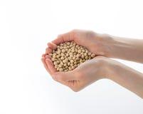 Rohe Sojabohnenöl-Bohnen Lizenzfreie Stockbilder