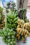 Rohe und reife Bananen in Thailand lizenzfreie stockbilder