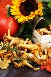 Rohe wilde Pfifferlingspilze Zusammensetzung mit wilden Pilzen stockfoto