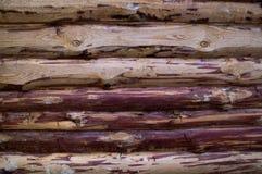 Roher Baum Lizenzfreie Stockbilder