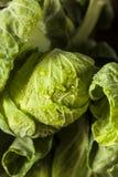 Roher grüner organischer Rosenkohl Stockbild