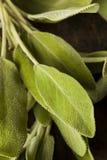 Roher grüner organischer Salbei Stockfotos