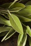 Roher grüner organischer Salbei Lizenzfreie Stockfotografie