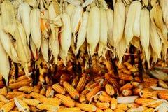 Roher Mais in Nord-Thailand Stockfotos
