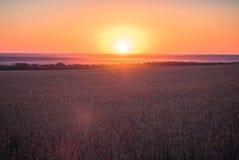 Roher Naturkosthintergrund Sonnenunterganghimmel mit Wolken über ländlicher Szene Grünes Herbstweizenfeld Sonnige Glättungsstrahl stockfotos