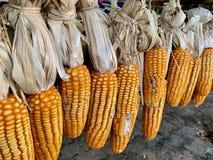 Roher organischer Mais nicht giftig auf Regal lizenzfreie stockbilder