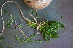 Rohes frisches grünes Thymianbündel, Edelstahlscheren und Jutefaser rope stockbilder