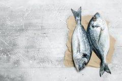 Rohes Seefisch dorado auf altem Papier lizenzfreie stockbilder