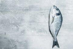 Rohes Seefisch dorado stockfoto