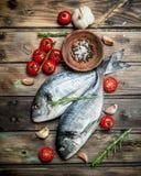 Rohes Seefisch dorado mit Tomaten, Gewürzen und Kräutern lizenzfreie stockfotos