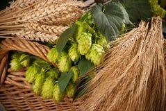 Rohstoff für Bierherstellung Lizenzfreie Stockfotografie