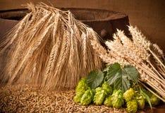 Rohstoff für Bierherstellung Stockfotos