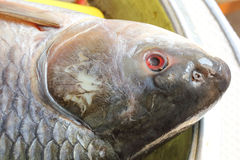 Rohu carb fish head Royalty Free Stock Images