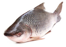 Rohu or Rohit fish of Indian subcontinent Stock Photos
