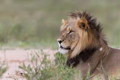 Roi africain Images libres de droits