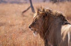 Roi africain Photo libre de droits