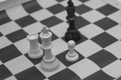 Roi blanc et noir contestant pour la victoire Photos stock