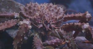 roi d'Alaska de crabe banque de vidéos