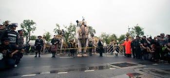 Roi d'honneurs de cortège d'éléphant défunt Photos stock