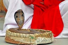 roi de cobra Images libres de droits
