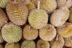 Roi de durian photo stock