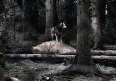 Roi de la forêt images libres de droits