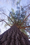 Roi de la forêt Photos libres de droits