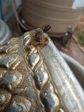 Roi de scorpion sur la cuvette argentée photo libre de droits