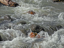 Roiling Creek Stock Image