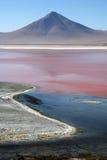 Roja Bolivia di Laguna Immagini Stock