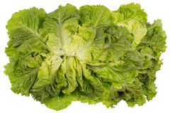 Rojal salad isolated Stock Images