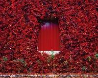 Rojo Imagenes de archivo