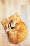Rojo anaranjado pacífico Tabby Cat Male Kitten Sleeping Imágenes de archivo libres de regalías