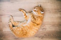 Rojo anaranjado pacífico Tabby Cat Male Kitten Sleeping Imagenes de archivo