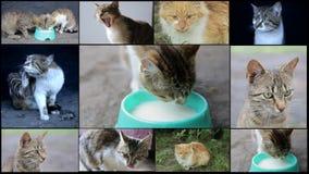 Rojo anaranjado pacífico Tabby Male Kitten Fije el collage, Backgroundcats, cría del gato, collage de los gatos, animales domésti metrajes