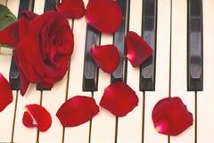Rojo color de rosa, pétalos, claves blancos y negros del piano Imagenes de archivo