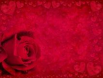 Rojo color de rosa y corazones Imagenes de archivo