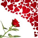 Rojo color de rosa y corazones para los amantes Foto de archivo