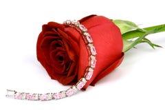 Rojo color de rosa y joya 2 Fotos de archivo libres de regalías
