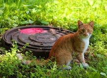 Rojo con el gato blanco de la calle que se sienta en la hierba foto de archivo