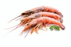 Rojo crustáceo de la gamba con perejil verde fotos de archivo