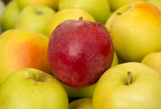 Rojo de Apple entre el amarillo Foto de archivo libre de regalías