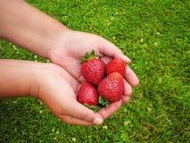 Rojo de la fresa algunos pedazos en la mano de la muchacha el verano Fotos de archivo