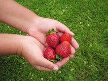 Rojo de la fresa en la mano de la muchacha Fotos de archivo libres de regalías