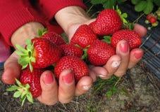 Rojo de la fresa en la mano de la muchacha Fotografía de archivo