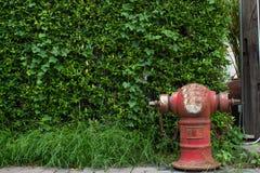 Rojo de la manguera del abastecimiento de agua de la lucha contra el fuego Fotografía de archivo libre de regalías